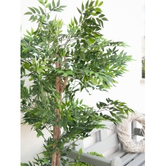 EUROPALMS Ficus longifolia, artificial plant, 165cm #9