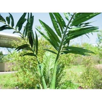 EUROPALMS Phoenix palm, artificial plant, 240cm #6