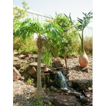 EUROPALMS Phoenix palm, artificial plant, 240cm #7