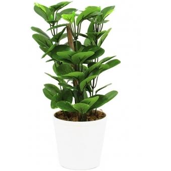EUROPALMS Green leaf plant, 30cm
