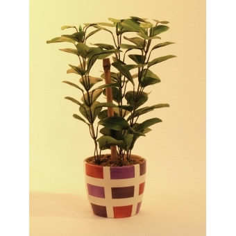 EUROPALMS Green leaf plant, 30cm #2