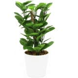 EUROPALMS Green leaf plant, 30cm