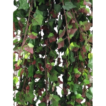 EUROPALMS Deluxe ivy tendril, green-red 160cm #2