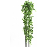 EUROPALMS Classical Potho Tendril, 160cm