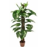 EUROPALMS Pothos on trunk, 150cm