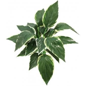 EUROPALMS Hosta, green-white, 51cm