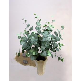 EUROPALMS Eucalyptus bush, 50cm #2