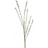 EUROPALMS Pussy willow spray, 117cm