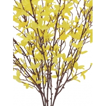 EUROPALMS Forsythia bush, 60cm #2