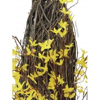 EUROPALMS Forsythia bush, 60cm #4