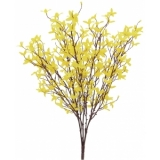 EUROPALMS Forsythia bush, 60cm