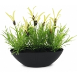 EUROPALMS Feather lettuce, 27cm