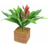 EUROPALMS Guzmania with red flower, 48cm