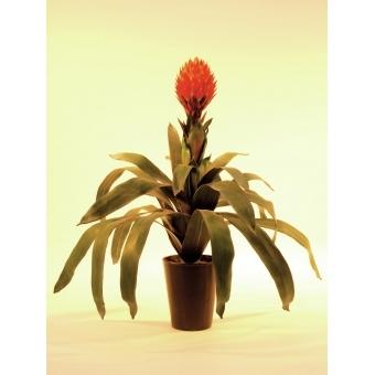 EUROPALMS Bromelia, 68cm #2
