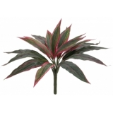 EUROPALMS Dracena, red-green, 27cm