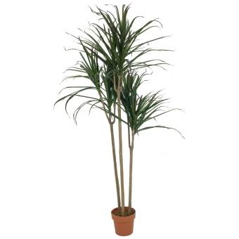 EUROPALMS Dracaena, green, 180cm