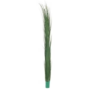EUROPALMS Reed grass, dark green, 127cm