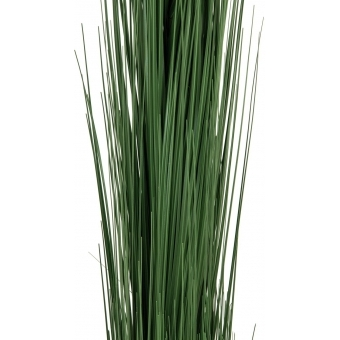 EUROPALMS Reed grass, dark green, 127cm #2