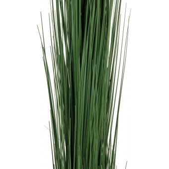 EUROPALMS Reed grass, dark green, 127cm #2