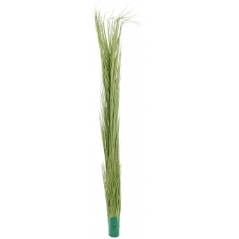 EUROPALMS Reed grass, light green, 127cm