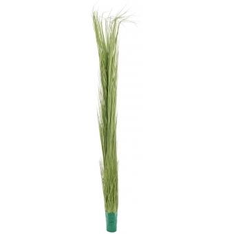 EUROPALMS Reed grass, light green, 127cm