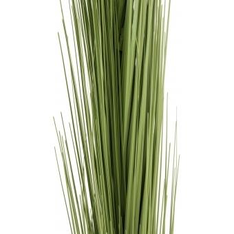 EUROPALMS Reed grass, light green, 127cm #2