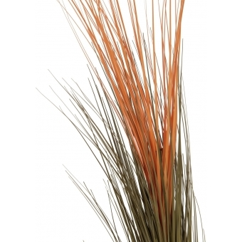 EUROPALMS Reed grass, light brown, 127cm #2