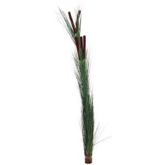 EUROPALMS Reed grass with cattails,dark-green,152cm