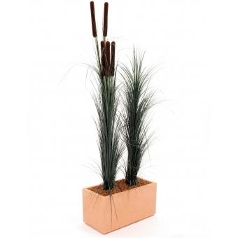 EUROPALMS Reed grass with cattails,dark-green,152cm #3