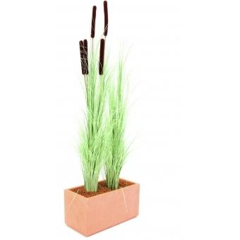 EUROPALMS Reed grass w/ cattails,light green,152cm #3