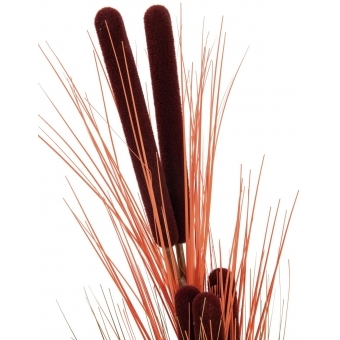 EUROPALMS Reed grass w/ cattails, light-brown,152cm #2