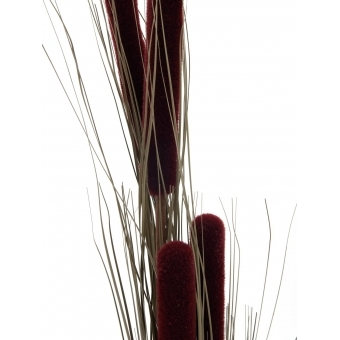 EUROPALMS Reed grass cattails, dark-brown, 152cm #2