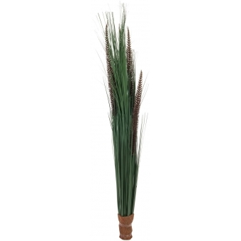 EUROPALMS Fountain grass with panicles, 96cm