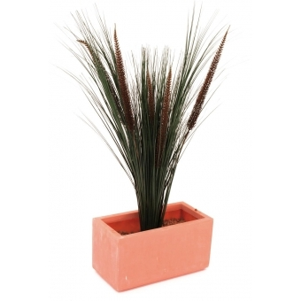EUROPALMS Fountain grass with panicles, 96cm #3