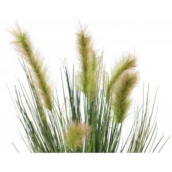 EUROPALMS Moor-grass in pot, 60cm #2