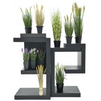 EUROPALMS Moor-grass in pot, 60cm #3