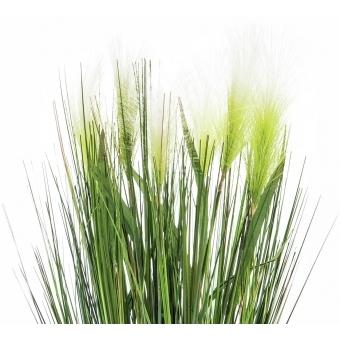 EUROPALMS Feather grass, white, 60cm #2