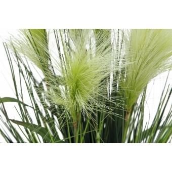 EUROPALMS Feather grass, white, 60cm #3