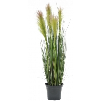 EUROPALMS Feather grass, rosé, 90cm