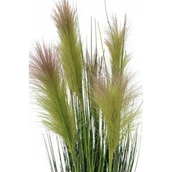 EUROPALMS Feather grass, rosé, 90cm #2