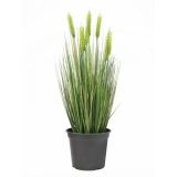 EUROPALMS Wheat early summer 60cm