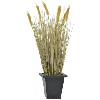 EUROPALMS Wheat ready to harvest 60cm