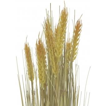 EUROPALMS Wheat bunch, 60cm #3