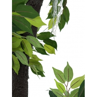 EUROPALMS Ficus Forest Tree, 150cm #2