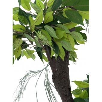 EUROPALMS Ficus Forest Tree, 150cm #3