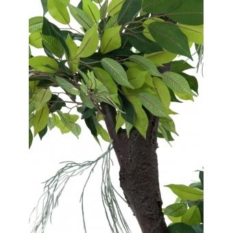 EUROPALMS Ficus Forest Tree, 150cm #3