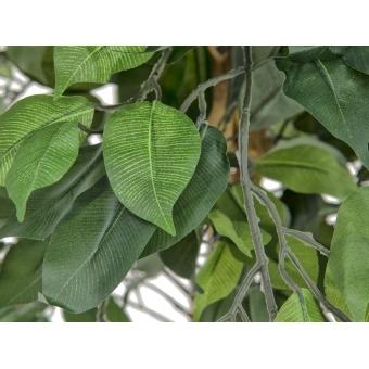 EUROPALMS Ficus Tree Multi Trunk, 150cm #2
