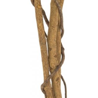 EUROPALMS Ficus Tree Multi Trunk, 150cm #3