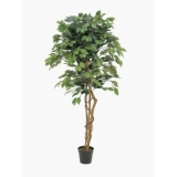 EUROPALMS Ficus Tree Multi Trunk, 150cm