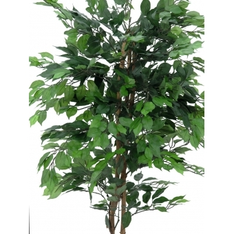 EUROPALMS Ficus Tree Multi-Trunk, 210cm #2